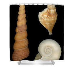 Shell - Conchology - Shells Shower Curtain by Mike Savad