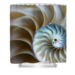 Shell Shower Curtain by David and Carol Kelly