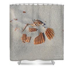 Shell Jigsaw Shower Curtain by Meandering Photography