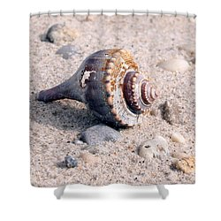 Shower Curtain featuring the photograph Shell by Karen Silvestri