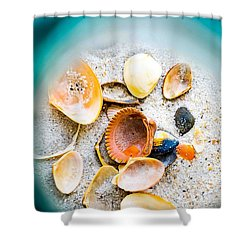 Shell Paradise  Shower Curtain by Mary Ward