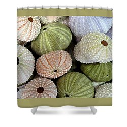 Shells 5 Shower Curtain