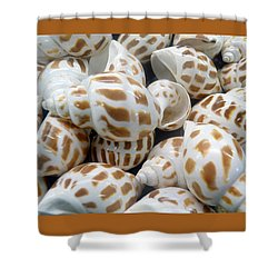 Shells - 7 Shower Curtain