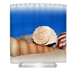 Shells In Sand Shower Curtain by Francie Davis