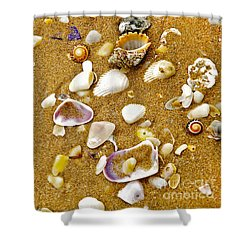 Shells In The Sand Shower Curtain by Kaye Menner
