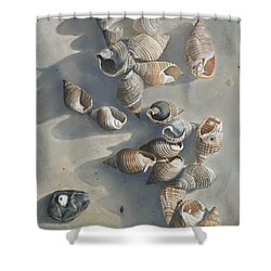 Shells On A Sandy Beach Shower Curtain