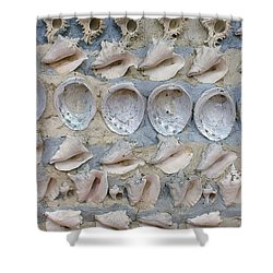 Shells Shower Curtain by Randy Pollard