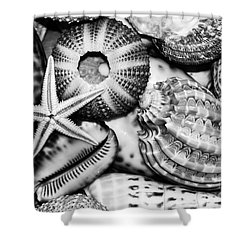 Shellscape In Monochrome Shower Curtain by Kaye Menner