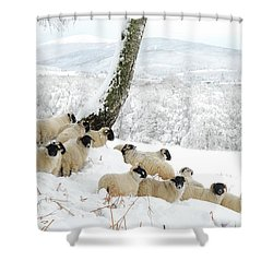 Sheltering Flock Shower Curtain by John Kelly