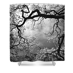 Sheltering Sky Shower Curtain by Laurie Search