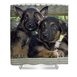 Shepherd Pups 2 Shower Curtain by Aimee L Maher Photography and Art Visit ALMGallerydotcom
