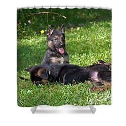 Shepherd Pups 20 Shower Curtain by Aimee L Maher Photography and Art Visit ALMGallerydotcom