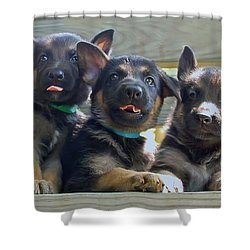 Shepherd Pups 3 Shower Curtain by Aimee L Maher Photography and Art Visit ALMGallerydotcom