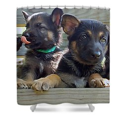 Shepherd Pups 5 Shower Curtain