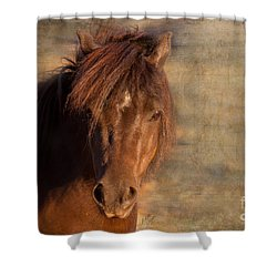 Shetland Pony At Sunset Shower Curtain