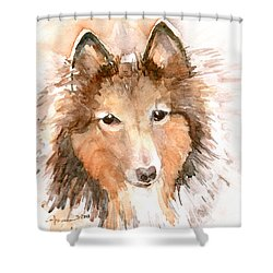 Shetland Sheepdog Shower Curtain by Claudia Hafner