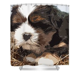 Shih Tzu On A String Shower Curtain by Robert Margetts