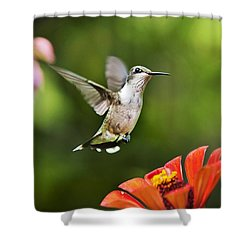 Shimmering Breeze Hummingbird Shower Curtain by Christina Rollo