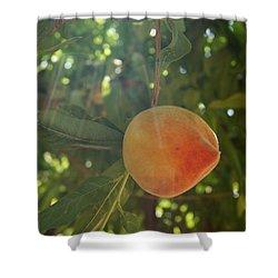 Shining Peach Shower Curtain by Kerri Mortenson