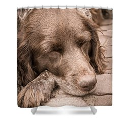 Shower Curtain featuring the photograph Shishka Dog Dreaming The Day Away by Peta Thames