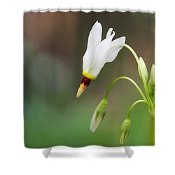 Shooting Star Wildflower Shower Curtain by Melinda Fawver