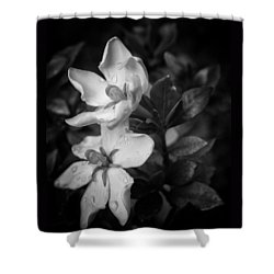 Shooting Stars Plural Shower Curtain