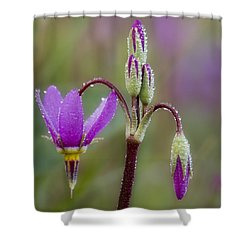 Shower Curtain featuring the photograph Shooting Stars Square by Sonya Lang