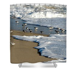 Shore Birds South Florida Shower Curtain by Marilyn Holkham