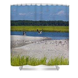 Shorebirds And Marsh Grass Shower Curtain