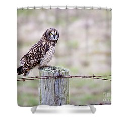 Short Eared Owl Boundary Bay Shower Curtain