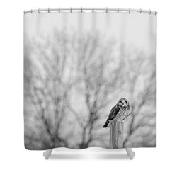 Short-eared Owl In Black And White Shower Curtain