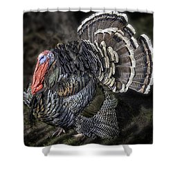 Short Feathers Tom Shower Curtain by Lynn Palmer