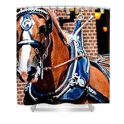 Show Horse Shower Curtain