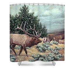 Showdown Shower Curtain by Craig T Burgwardt