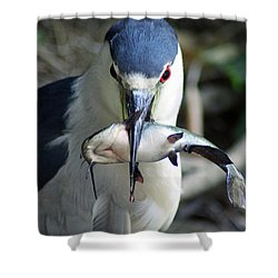 Showing Off His Lunch Shower Curtain by Shoal Hollingsworth