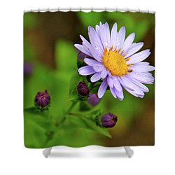 Showy Aster Shower Curtain by Ed  Riche