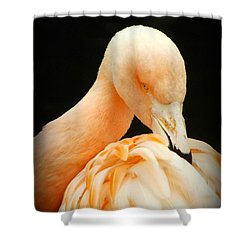 Shy Shower Curtain by Clare Bevan