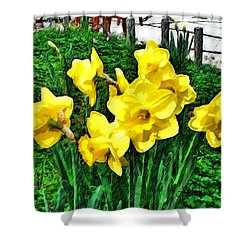 Shy Daffodils  Shower Curtain
