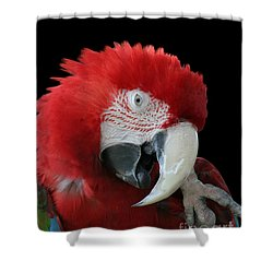 Shy Macaw Shower Curtain by Judy Whitton