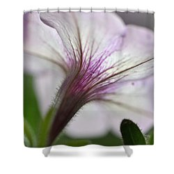 Shower Curtain featuring the photograph Shy Petunia by Larry Bishop