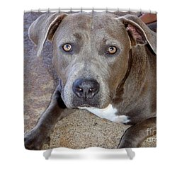 Shy Pit Bull Puppy Shower Curtain by Mary Deal