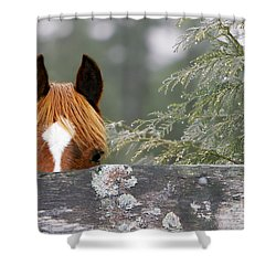 Shyness Shower Curtain by Michelle Twohig