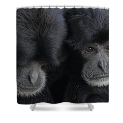 Siamang Pair Shower Curtain
