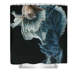Siamese Fighting Fish Three Shower Curtain