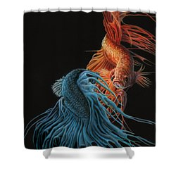 Siamese Fighting Fish Two Shower Curtain