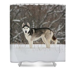 I've Been Spotted Shower Curtain