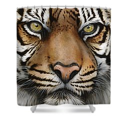 Siberian Tiger Closeup Shower Curtain