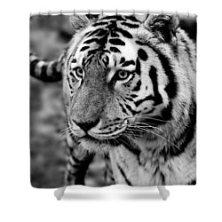 Siberian Tiger Monochrome Shower Curtain by Semmick Photo
