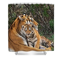 Siberian Tiger Mother And Cub Endangered Species Wildlife Rescue Shower Curtain by Dave Welling