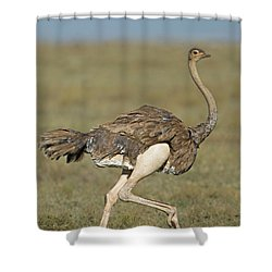 Side Profile Of An Ostrich Running Shower Curtain